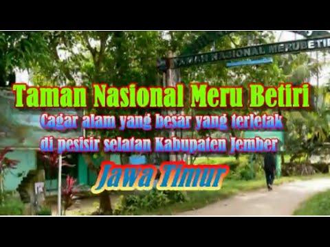 Wisata Indonesia Taman Nasional Meru Betiri Jawa Timur Mopon Id