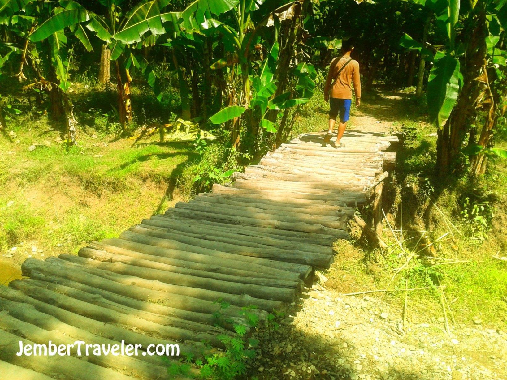 Air Terjun Maelang Jember Traveler Melewati Jembatan Kayu Wisata Alam