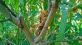 Wisata Alam Simbat Desa Glundengan Youtube 1 40 Kab Jember