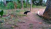 Wisata Alam Simbat Desa Glundengan Youtube 1 41 Kab Jember