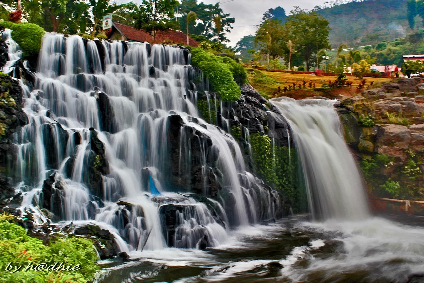 4 Catimor Homestay Blawan Sempol Bondowoso Agro Rolas Campo Waterfall