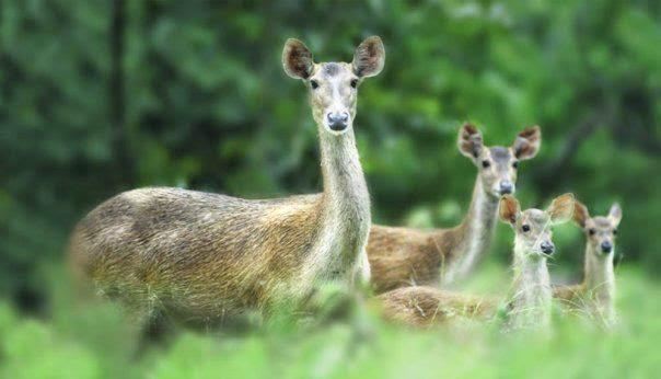 2015 Wisata Jembrana Fauna Taman Nasional Bali Barat Kab