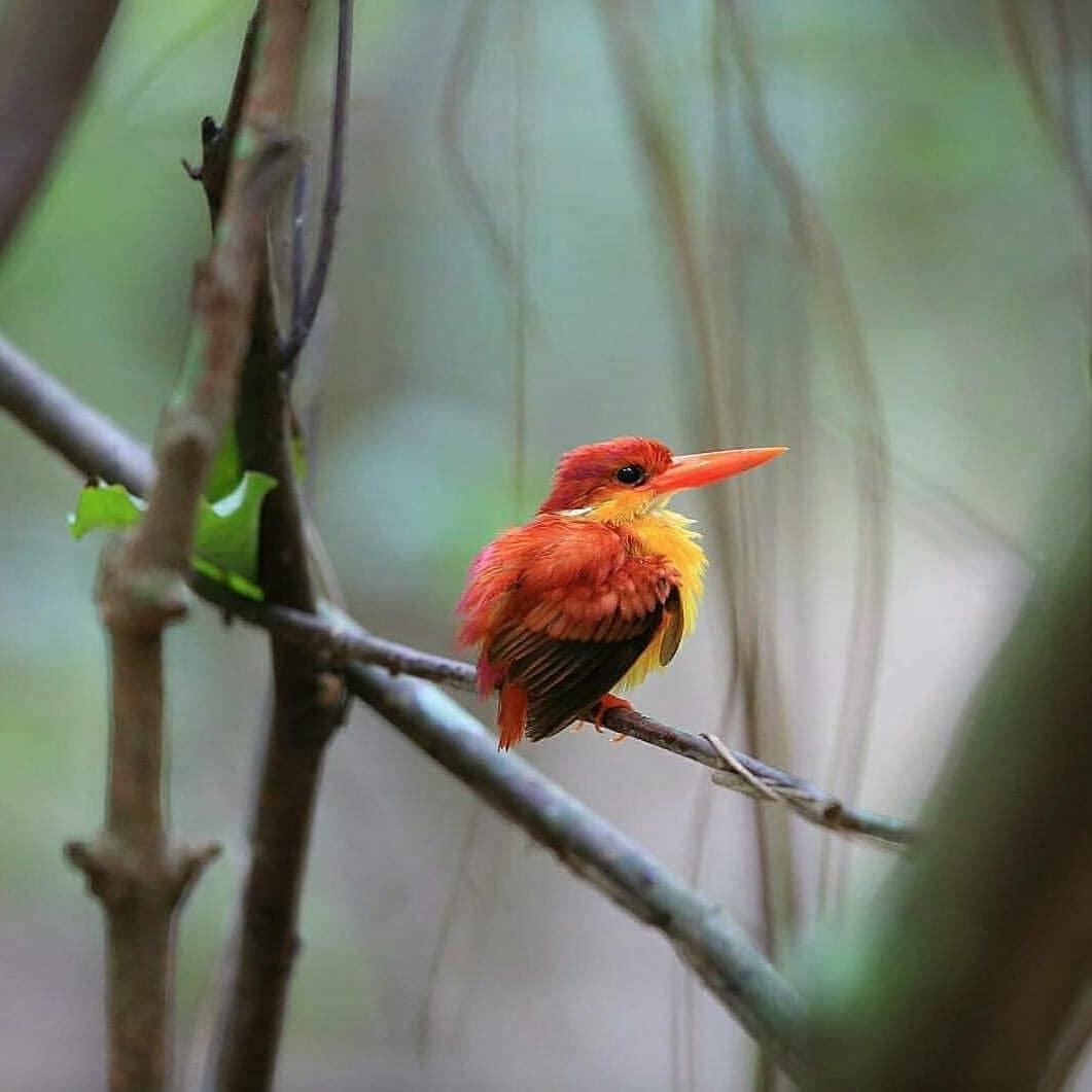 Beritajembrana Instagram Foto Pagi Semeton Burung Raja Udang Punggung Merah