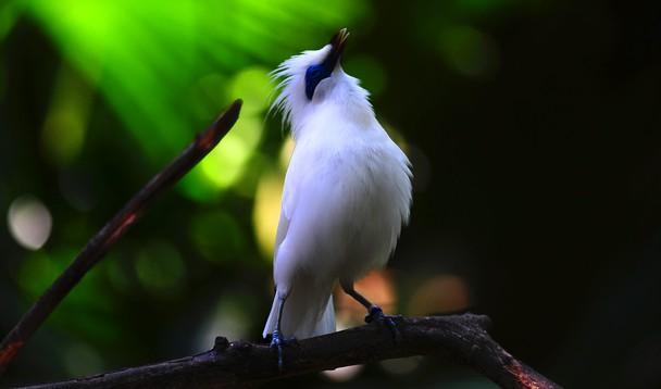 Indahnya Indonesiaku Taman Nasional Bali Barat West National Jalak Kab