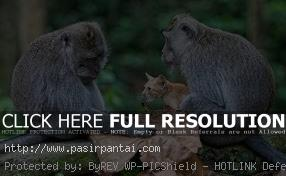 Taman Nasional Bali Barat Pasirpantai Kera Hitam Penghuni Tnbb Kab