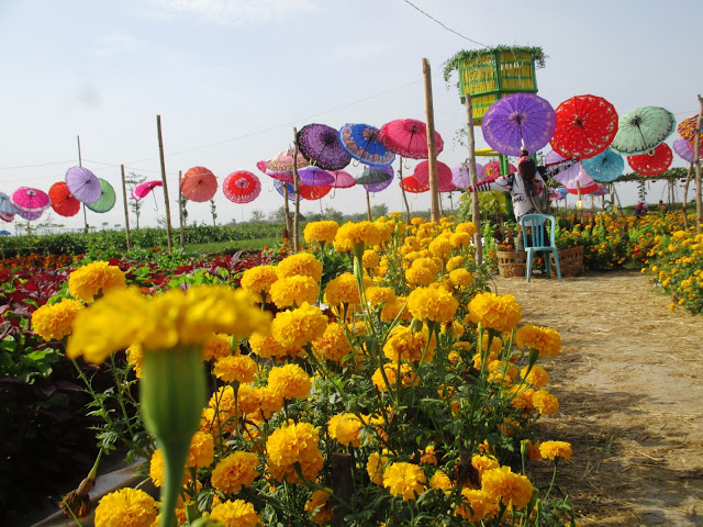 Jombang City Guide Agrowisata Taman Sayur Banjarsari Keukenhofnya Bale Tani