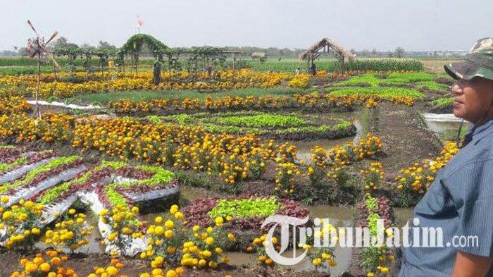 Jombang Memiliki Wisata Agro Eksotisme 200 Lebih Varietas Tanaman Taman