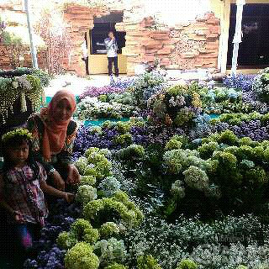 Menikmati Kesegaran Flora Taman Bunga Jombang Tamankota Pasangmata Ponggok Banjarsari