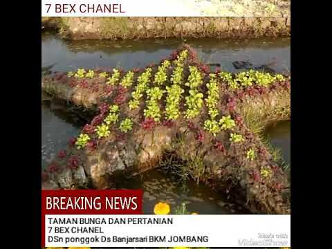 Taman Bunga Pertanian Dsn Ponggok Ds Banjarsari Bkm Jombang Bandarkedungmulyo
