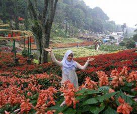 Temukan Keindahan Berbagai Bunga Cantik Taman Ponggok Jombang Kebun Wahana