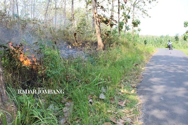 Awas Lima Kecamatan Jombang Rawan Kebakaran Hutan Ilustrasi Ngusikan Taman