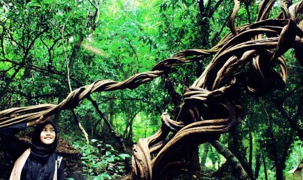 Nih 10 Tempat Wisata Jombang Pas Bersantai Wana Sumberboto Taman