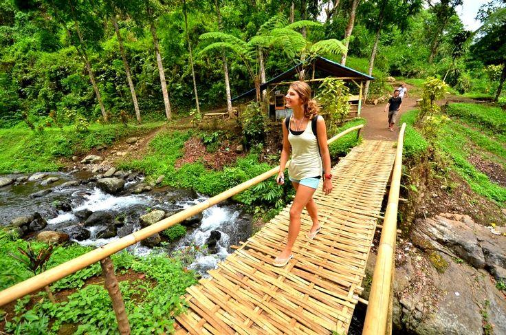 Wisata Air Terjun Agrowisata Kalibendo Jatim Perkebunan Kampung Karet Kab