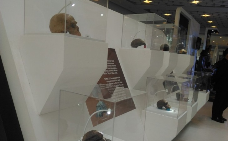 Homeland Java Man 15 Ribu Fosil Manusia Purba Museum Pameran