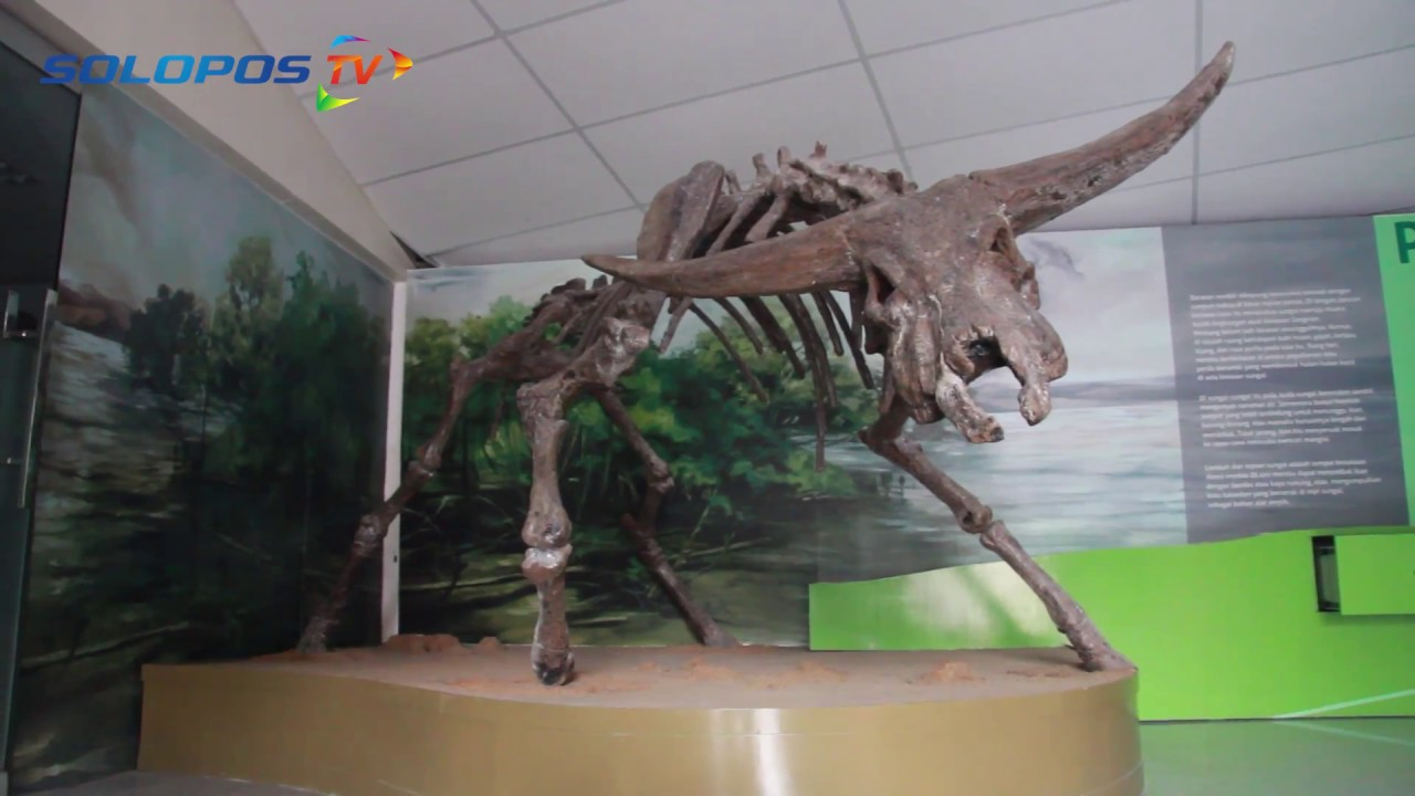 Wisata Karanganyar Bisa Lihat Pasir Berusia 700 000 Gondangrejo Museum
