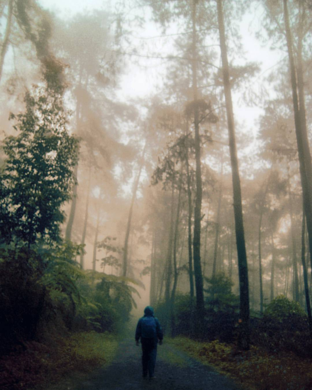 Ardhana Yathesta Aryathesta Instagram Profile Picbear Jungle Watch Bring Knees