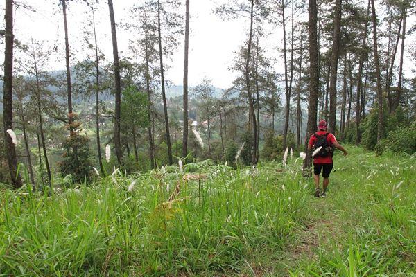 Ayo Datang 10 Tempat Wisata Karanganyar Berikut Taman Hutan Raya