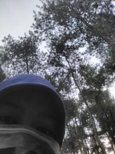 Berkemah Hutan Raya Karanganyar Jurnal Aksara Tahura Taman Satu Satunya