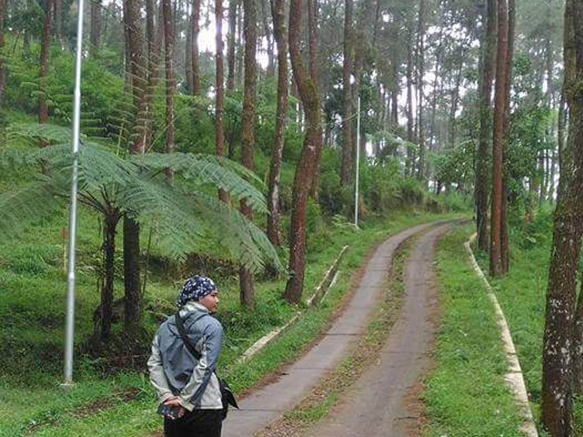 Cari Tempat Buat Prewedding Datang Tahura Karanganyar Intanpari Taman Hutan