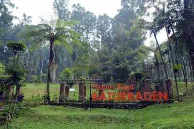 Kebun Raya Baturaden Taman Tanaman Pegunungan Jawa Alamendah Blog Hutan