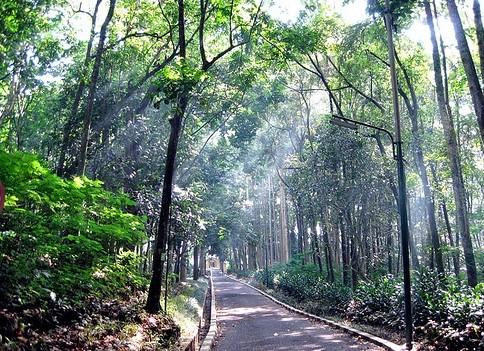 Pesona Keindahan Wisata Taman Hutan Raya Tahura Carita Pandeglang Banten