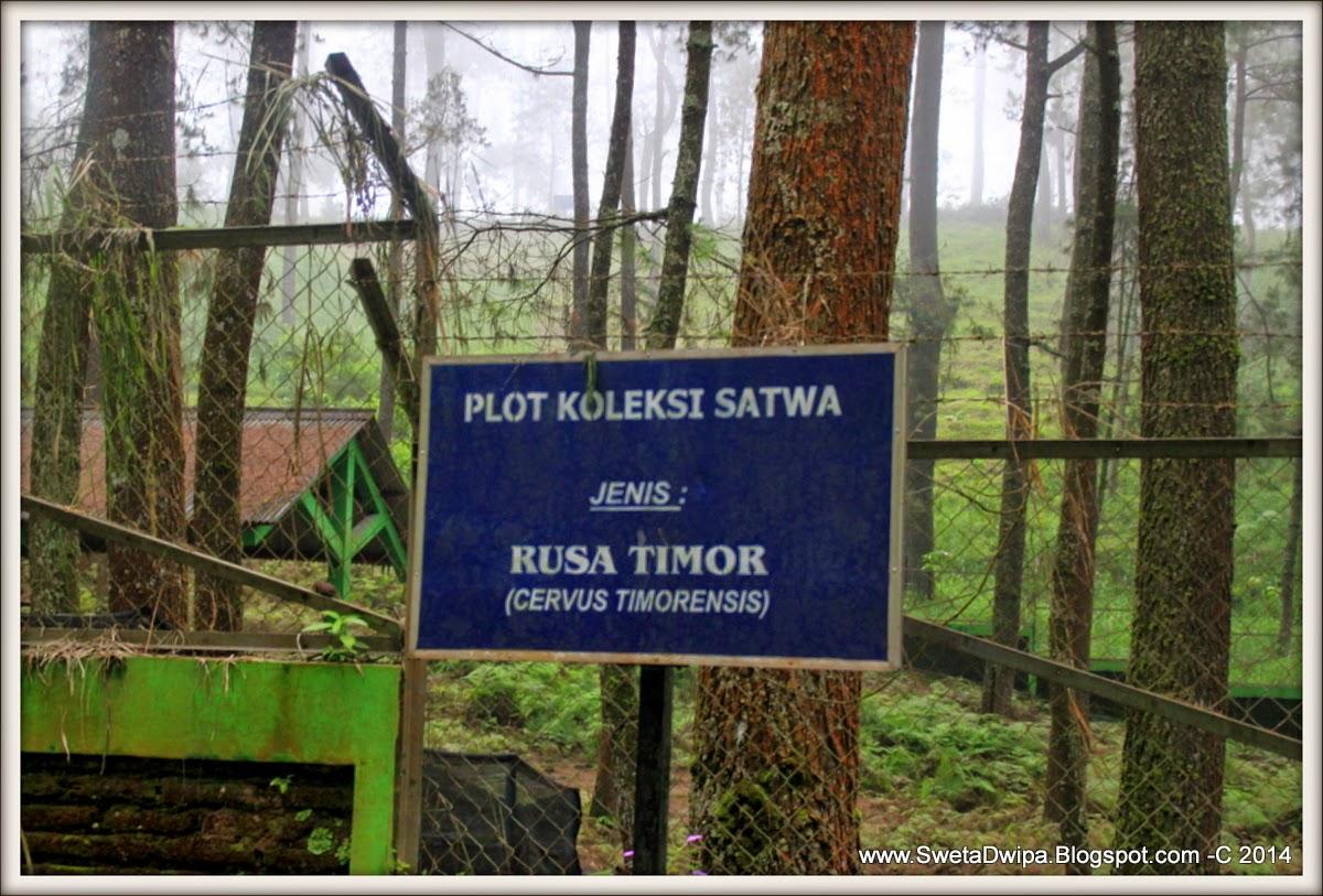 Sekar Rinonce Taman Hutan Raya P Mangkunagoro Belajar Bermain Rekreasi