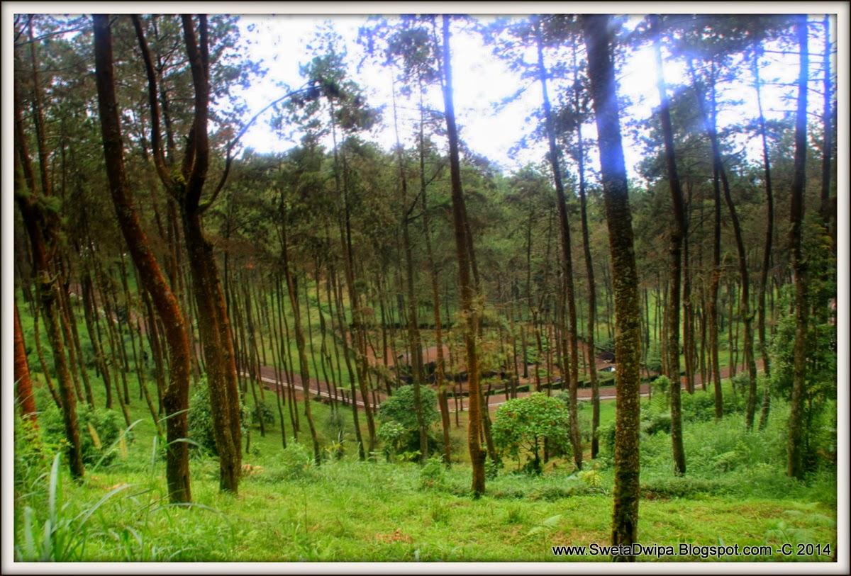Sekar Rinonce Taman Hutan Raya P Mangkunagoro Belajar Gallery Tahura