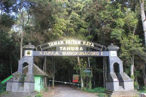 Tahura Ngargoyoso Hutan Wisata Kgpaa Mangkunegoro Lokasi Taman Raya Kab