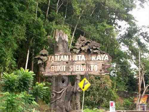 Taman Hutan Raya Indonesia Alamendah Blog Bukit Soeharto Kalimantan Timur