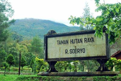 Taman Hutan Raya Raden Soerjo Tahura Kab Karanganyar