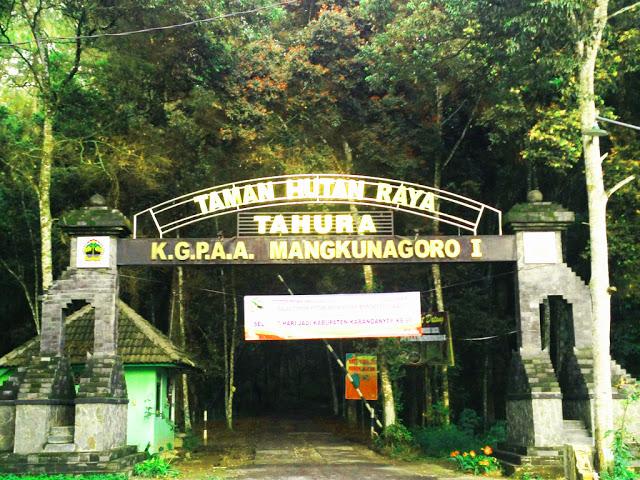 Taman Hutan Raya Tahura Soloraya Kgpaa Mangkunegoro Terletak Lereng Gunung