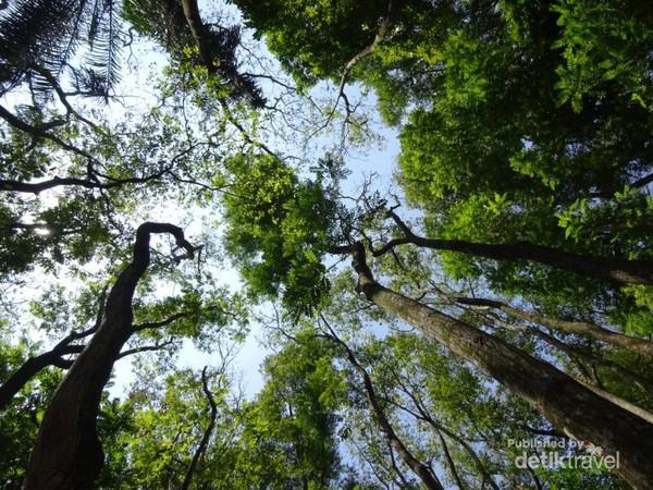 Udara Bandung Segar Hutan Raya Juanda Tahura Taman Kab Karanganyar