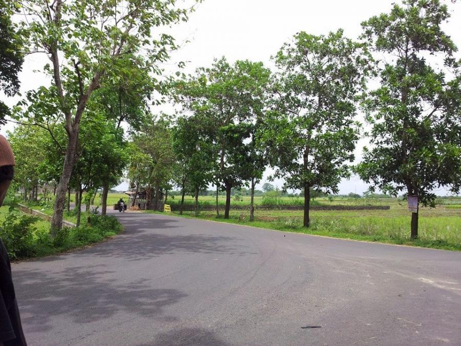 Tanah Dijual Tp Shm Pemukiman Jalan Raya Papahan Lalung Taman
