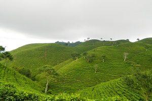 49 Tempat Wisata Tawangmangu Jawa Tengah Terbaru Tempatwisataunik 7 Kebun