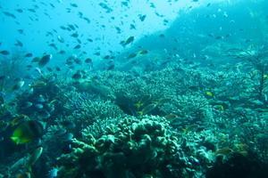 Snorkeling Bersantai Amed Lokasi Sebuah Desa Terletak Bali Timur Tepatnya