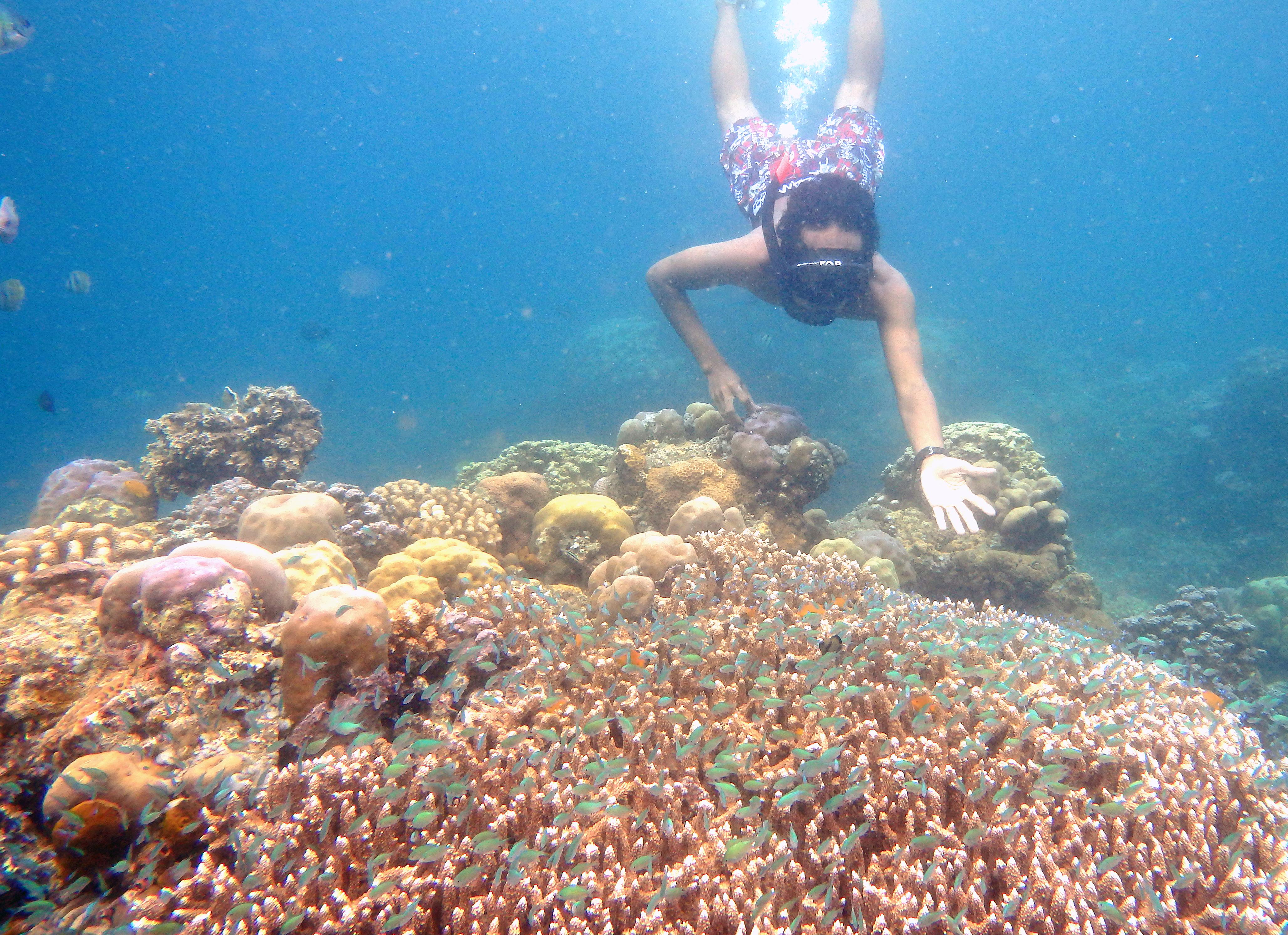 Snorkling Pantai Amed Bali Ayo Transport Kab Karangasem