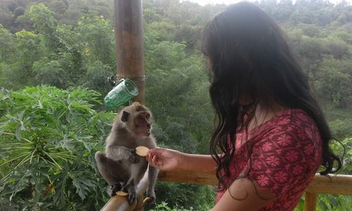 Lokasi Objek Wisata Rumah Pohon Batu Dawa Karangasem Bali Kab