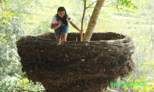 Rumah Pohon Bukit Lemped Desa Peladung Karangasem Bali Kab