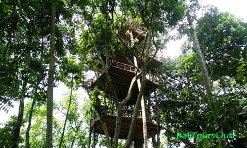 Rumah Pohon Desa Temega Kabupaten Karangasem Bali Bertingkat Kab