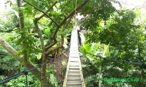 Rumah Pohon Desa Temega Kabupaten Karangasem Bali Jembatan Gantung Kab
