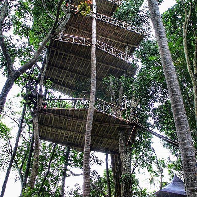 Rumah Pohon Temega Pesona Wisata Bali Karangasem Kab