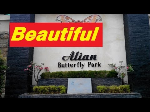 Alian Butterfly Park Indonesia Youtube Kab Kebumen