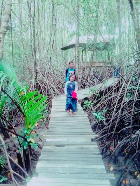 Diam Kebumen Punya Wisata Hutan Mangrove Wow Arung Jeram Padegolan