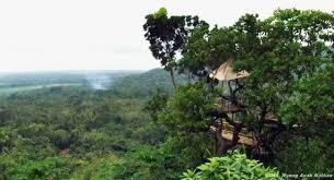 Wooww Inilah Dinasti Keindahan Kebumen Wow Punya Wisata Rumah Pohon