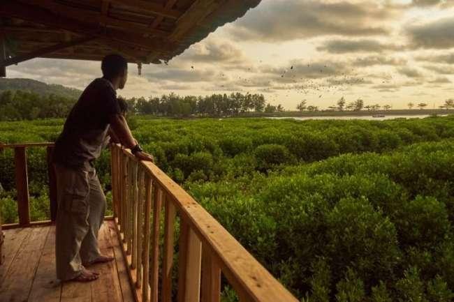 100 Wisata Kebumen Akhiri Liburanmu Memandangi Hijaunya Mangrove Logending Burung