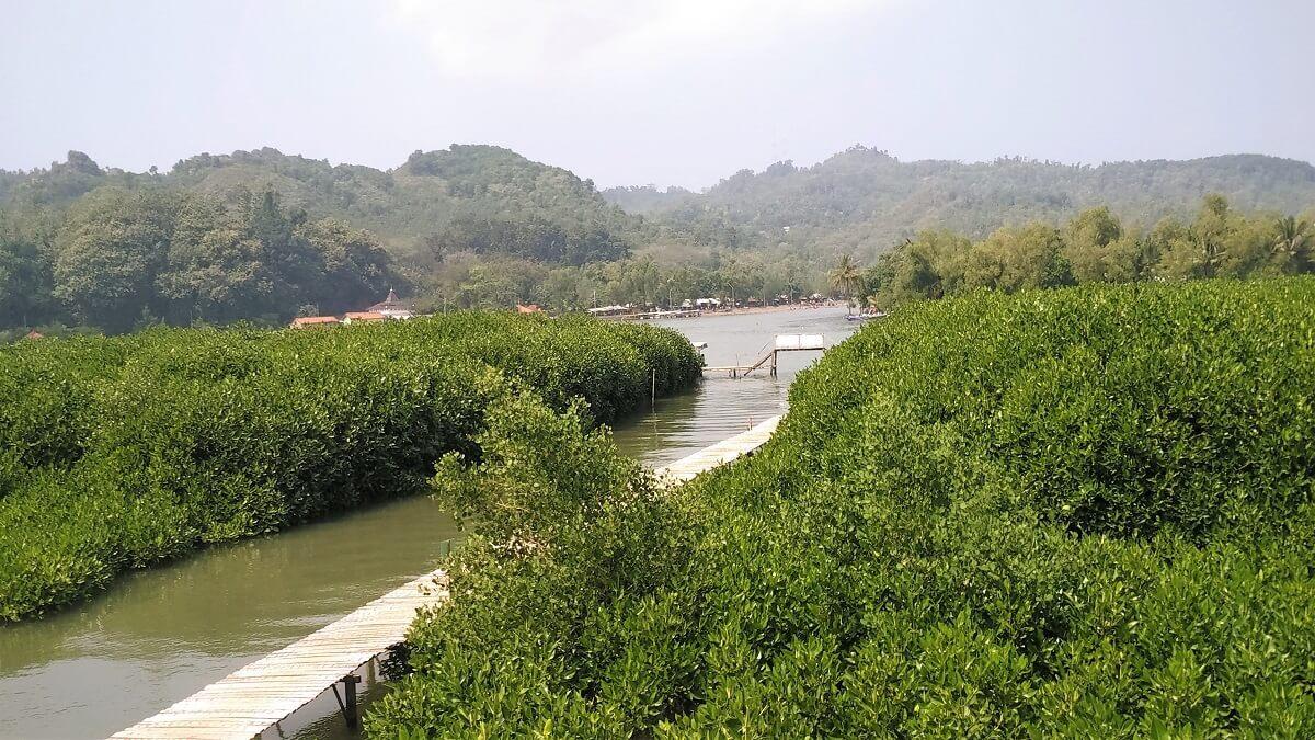 30 Pemandangan Cantik Hutan Mangrove Ayah Kebumen Infokebumen Indah Atas
