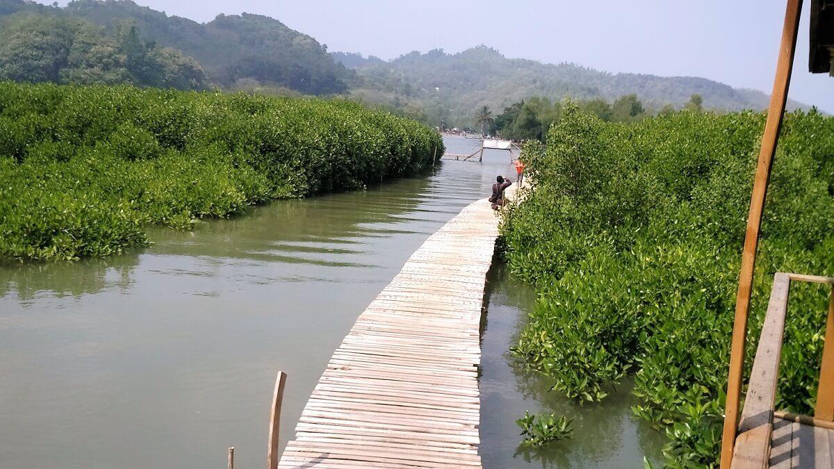 30 Pemandangan Cantik Hutan Mangrove Ayah Kebumen Infokebumen Lokasi Memang