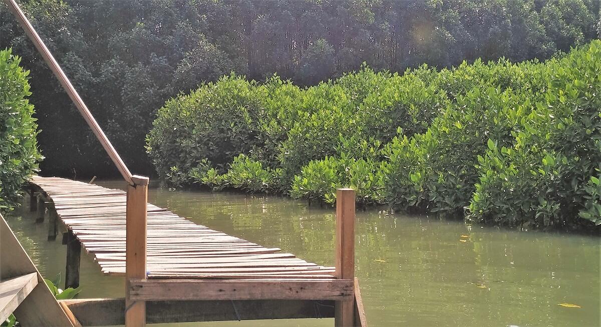 30 Pemandangan Cantik Hutan Mangrove Ayah Kebumen Infokebumen Objek View