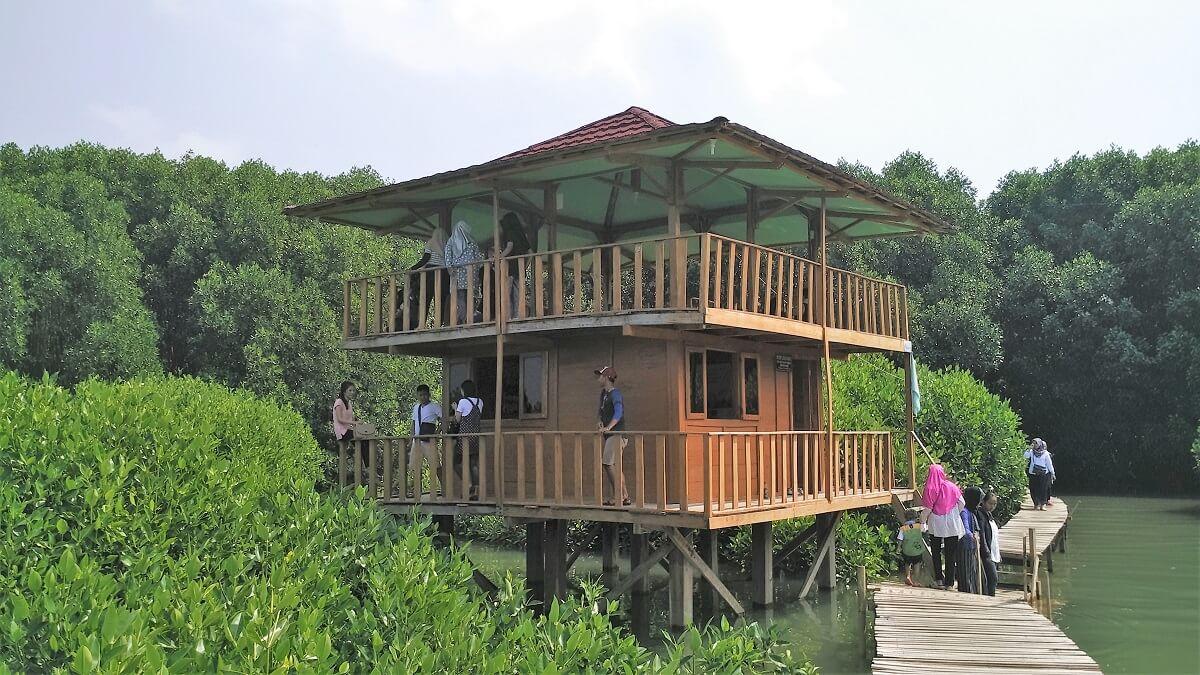30 Pemandangan Cantik Hutan Mangrove Ayah Kebumen Infokebumen Rumah Singgah