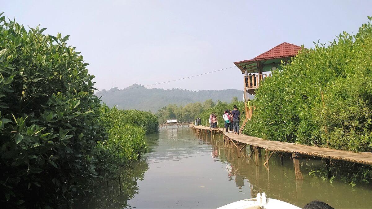 30 Pemandangan Cantik Hutan Mangrove Ayah Kebumen Infokebumen Susur Pantai